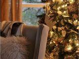 Twinkle Light Tree Farmhouse Christmas Lights tour Best Twinkle Twinkle Christmas