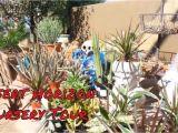 Viz Glass Garden Art Desert Horizon Nursery tour Talavera Pots Metal Garden Art