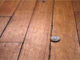 Wood Floor Crack Filler How to Repair Gaps Between Floorboards